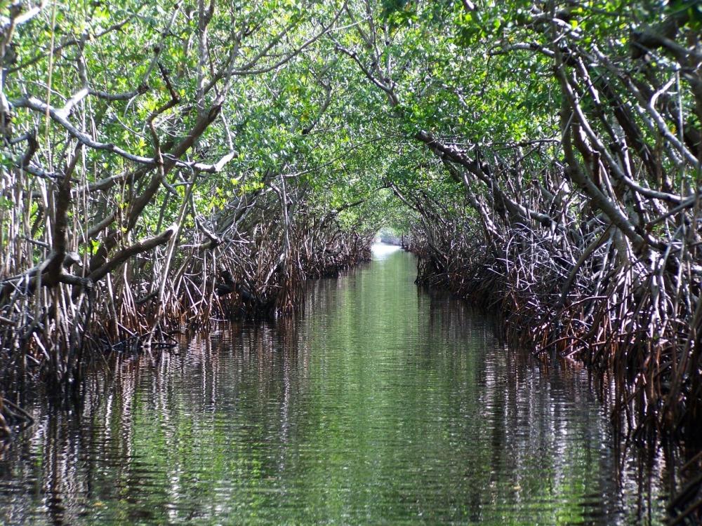 mangrovie.jpg